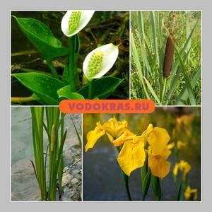 Растения для очистки пруда с рыбами - биоплато 20 шт.