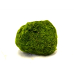 Кладофора шаровидная мал. (4-5 см)