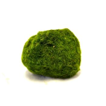 Кладофора шаровидная мал. (Ø 3-5 см)