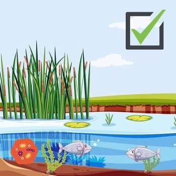 Комплект биопрепаратов: БИОСТАРТ Pond - 1 л, ♻️ BIOBAC - 500 гр, ⚡ VladOx Прозрачный пруд - 1 л