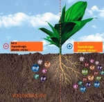 Aquadesign planta sticks+ сет-3 шт.