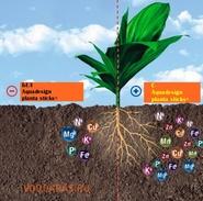 Aquadesign planta sticks+ сет-3 шт. нет в наличии