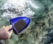Тонущий корм для карпа, форели и любой рыбы - 25 кг