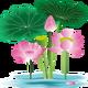 Лотосы для садового пруда