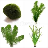 Микс из подводных растений - 10 шт.