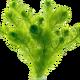 Подводные прудовые растения