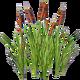 Прибрежные растения