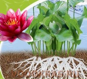 Подкормка для водных растений в шариках - Сет 5 шт