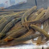 Вьюн - санитар пруда (15-25 см)