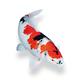 Живая рыба для садового водоема - Взгляните!